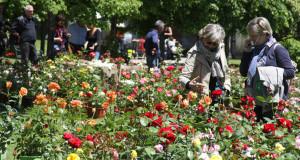 Rose di maggio, mostra-mercato