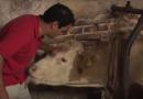 Il toccante video di un toro, incatenato per tutta la vita, che danza quando viene liberato