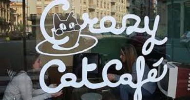 """Torna """"Happy Together"""" il ciclo di eventi dedicati al mondo felino organizzato dal Crazy Cat Cafè di Milano."""