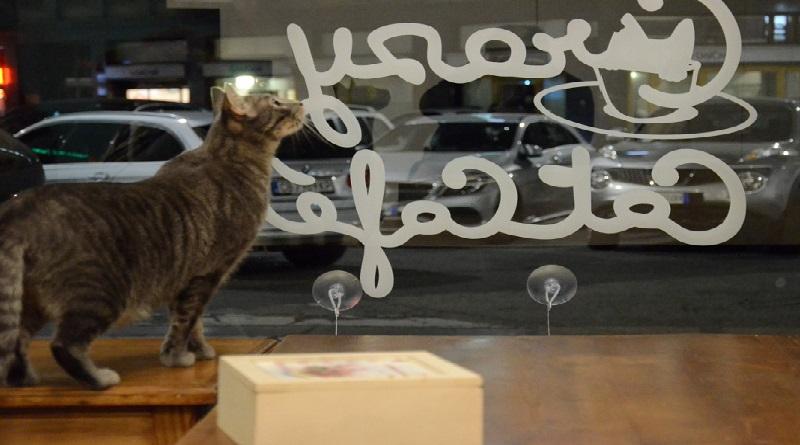 Sito di incontri per gli amanti del gatto