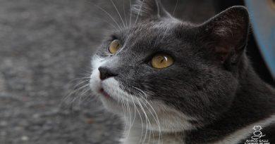 Biagio gatto di campagna.
