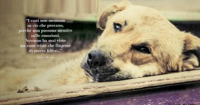 Il cane più buono del mondo. Lettera al mio amico blu