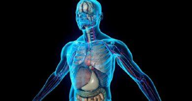 """New York: scoperto un """"nuovo"""" organo del corpo umano"""