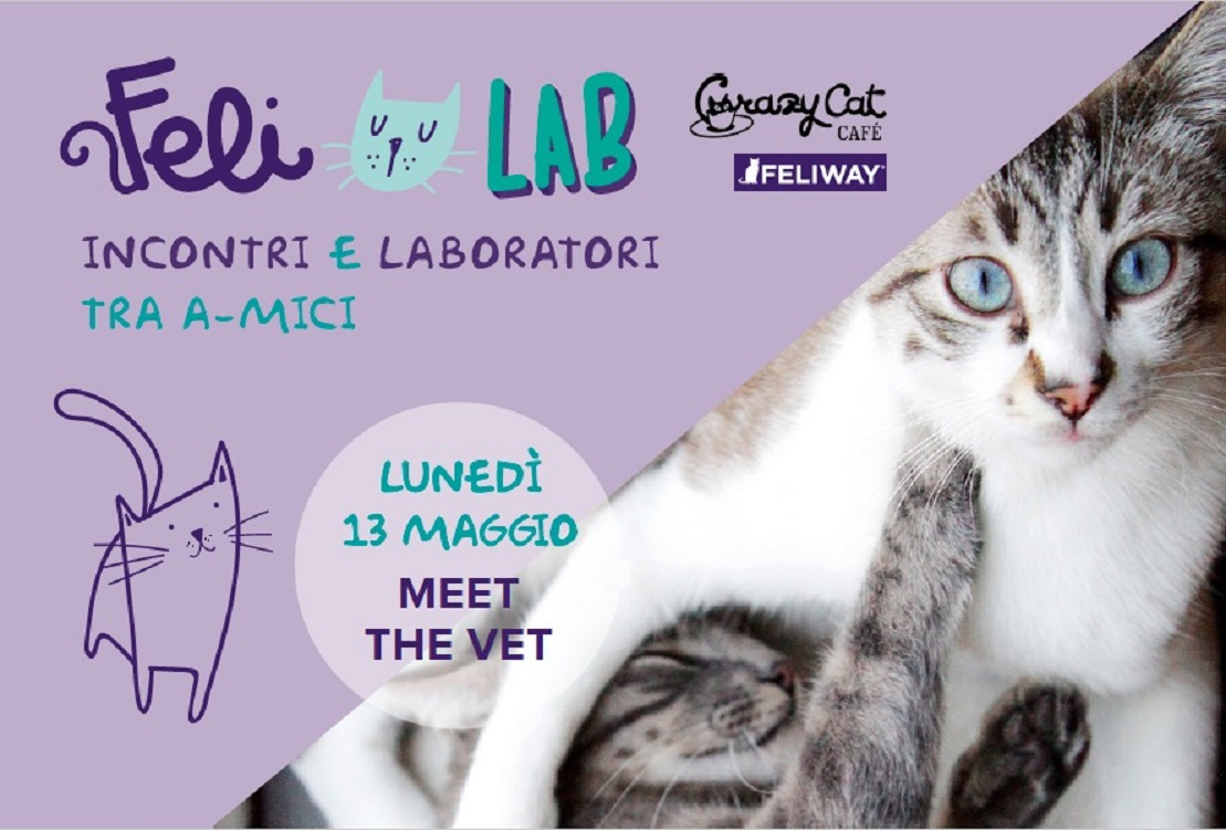 sito di incontri per gatti Free Internet Dating NZ