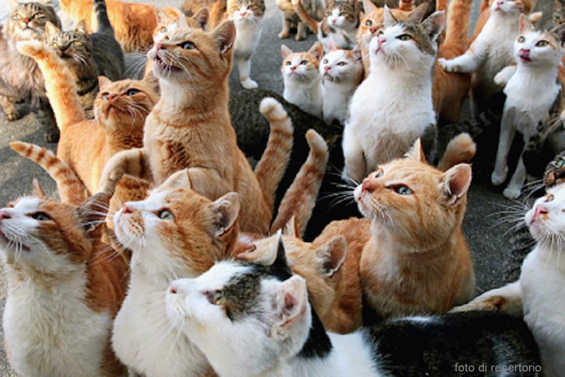 Vive In Condizioni Estreme Con Più Di 60 Gatti La Sua Unica