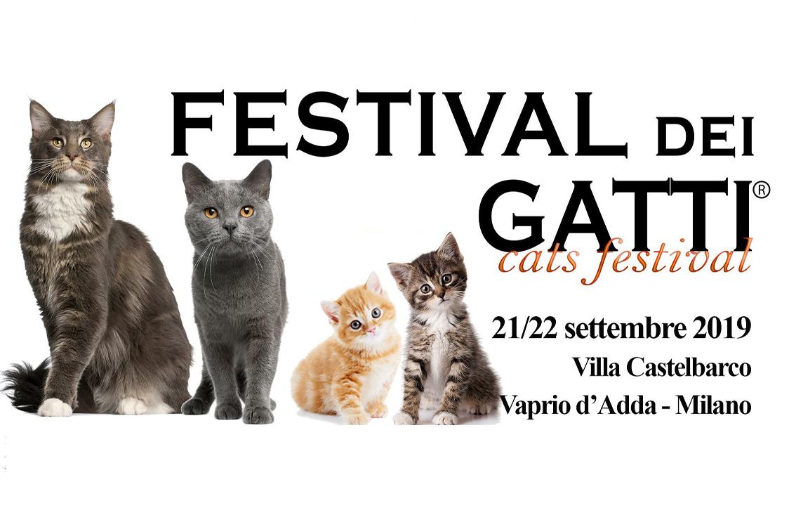 gattino sito di incontri incontri posti KL